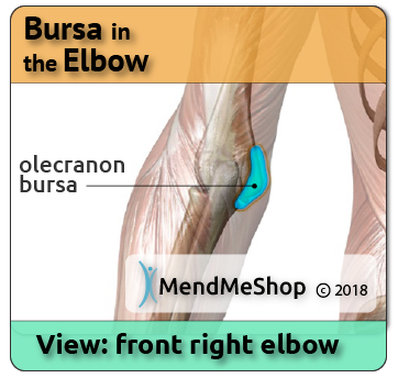 Olecranon Bursae in the Elbow and Bursa Pain